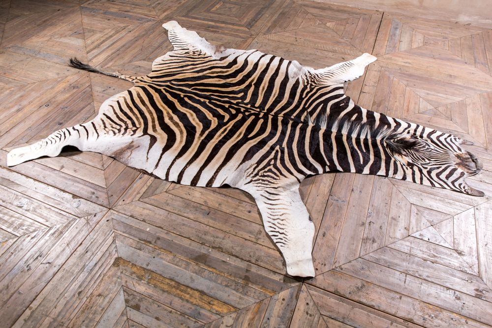 How To Make Your Room Look Good Using A Zebra skin rug